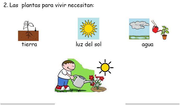 Ciclo de vida de las plantas para niños - Imagui