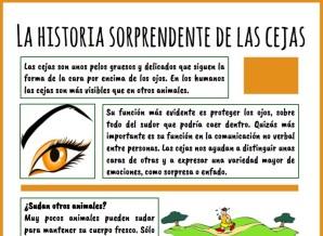 la historia de las cejas