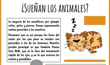 sueñas los animales